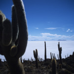 Cacti on the Salar de Uyuni