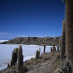 Pretty Prickly on the Salar de Uyuni