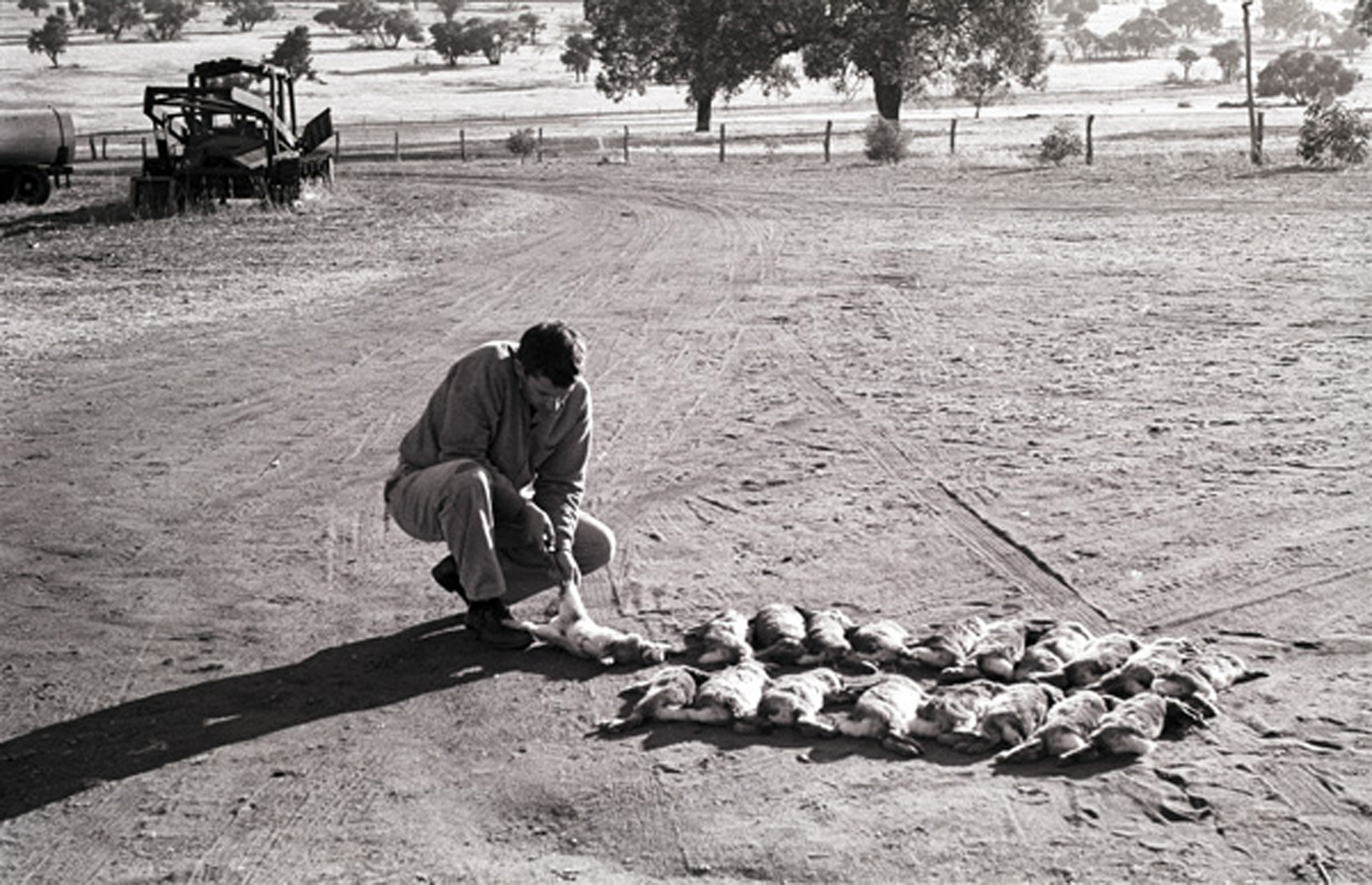 Dad killing shit loads of rabbits
