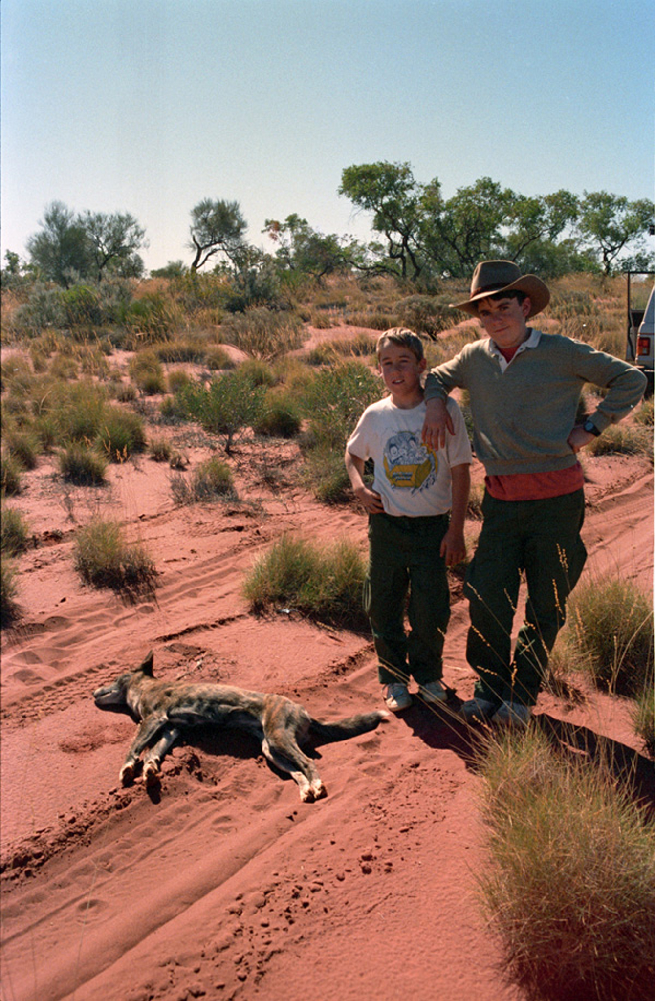 We didn't actually kill this dingo