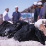 Sheep Market in Kashgar