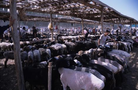 Livestock Market in Kashgar
