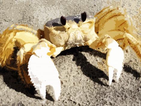 Anarchist Crab and Bipolar Jellyfish: Part I