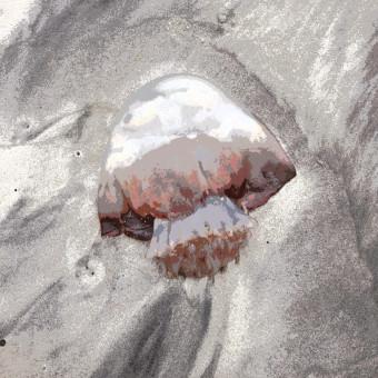 Deflated Bipolar Jellyfish