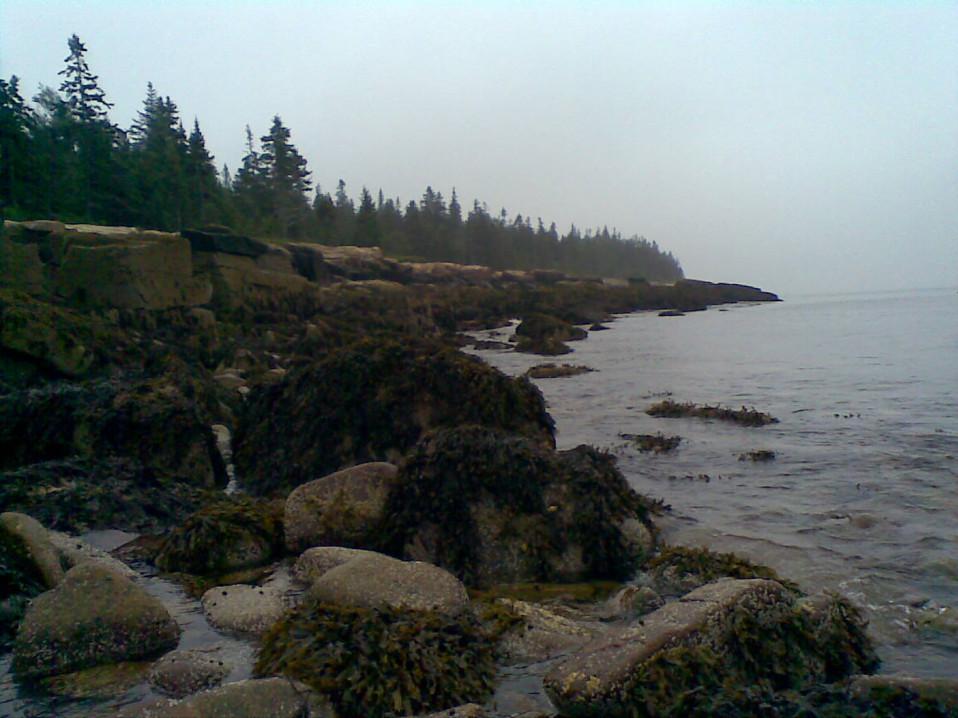 Maine's Coastline