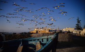 Gulls Over Essaouria
