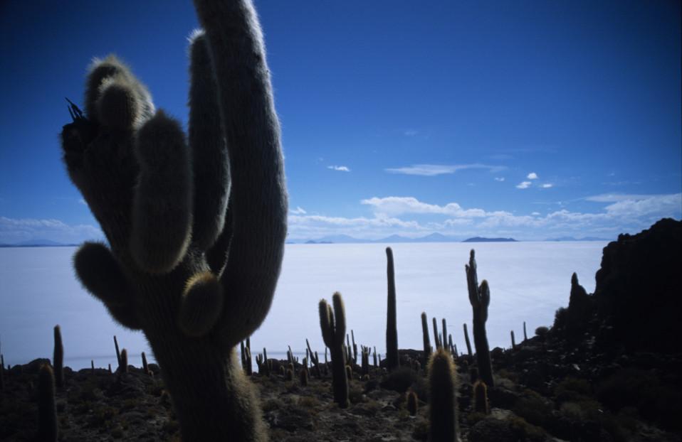 Cacti on the Salar de Uyuni