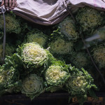 Cabbage for Sale