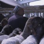 Kashgar Trader