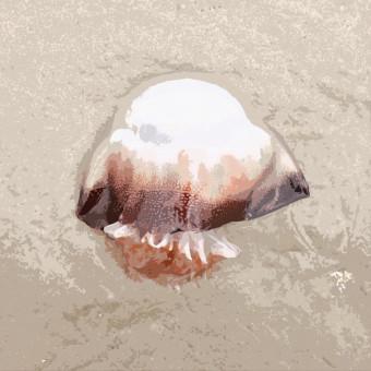 The Bipolar Jellyfish