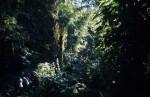 Jungle View on El Chorro Inca Trail